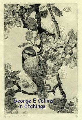 George Edward Collins - Blue Tit
