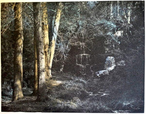 Jennifer Dickson - Dappled Sunlight (Bowood)