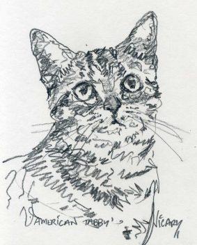 Steve Vicary - Bengal Kitten